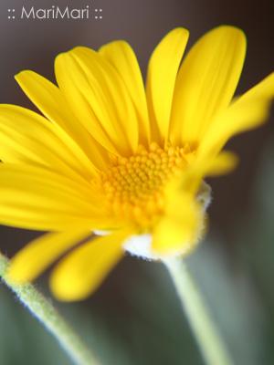 20061214_2.jpg