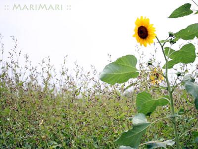 20070708_2.jpg