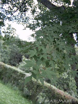 20070916_7.jpg